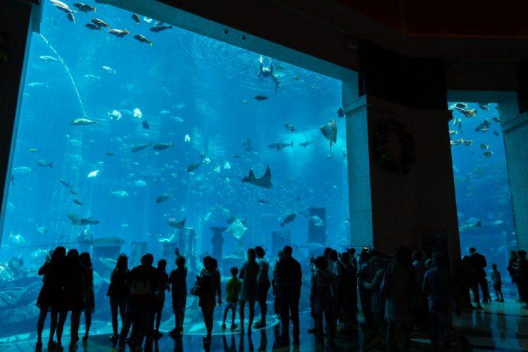 Dubai Aquarium en Underwater Zoo
