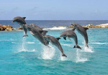 Dolfijnen-activiteiten-Curaçao